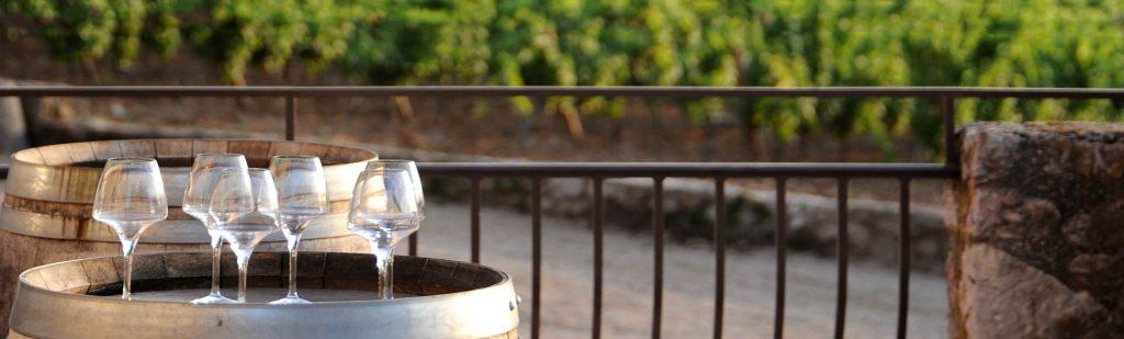 A découvrir : le vin de Provence de l'Escarelle